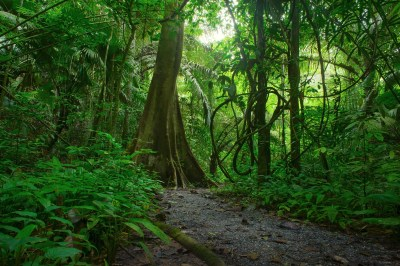 Jungle Wallpapers, Pictures, Images