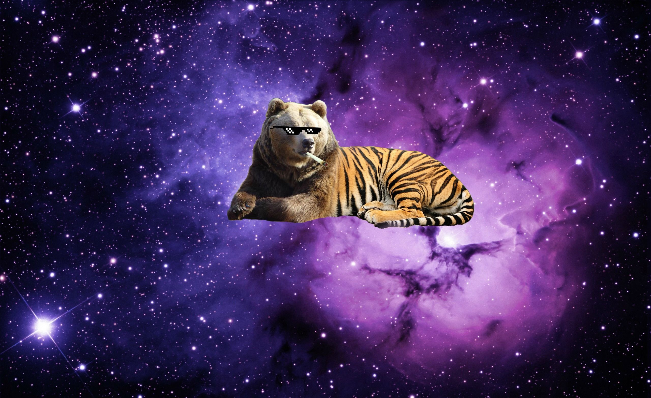 Lsd Wallpaper Iphone Funny Animal Backgrounds Pictures Images