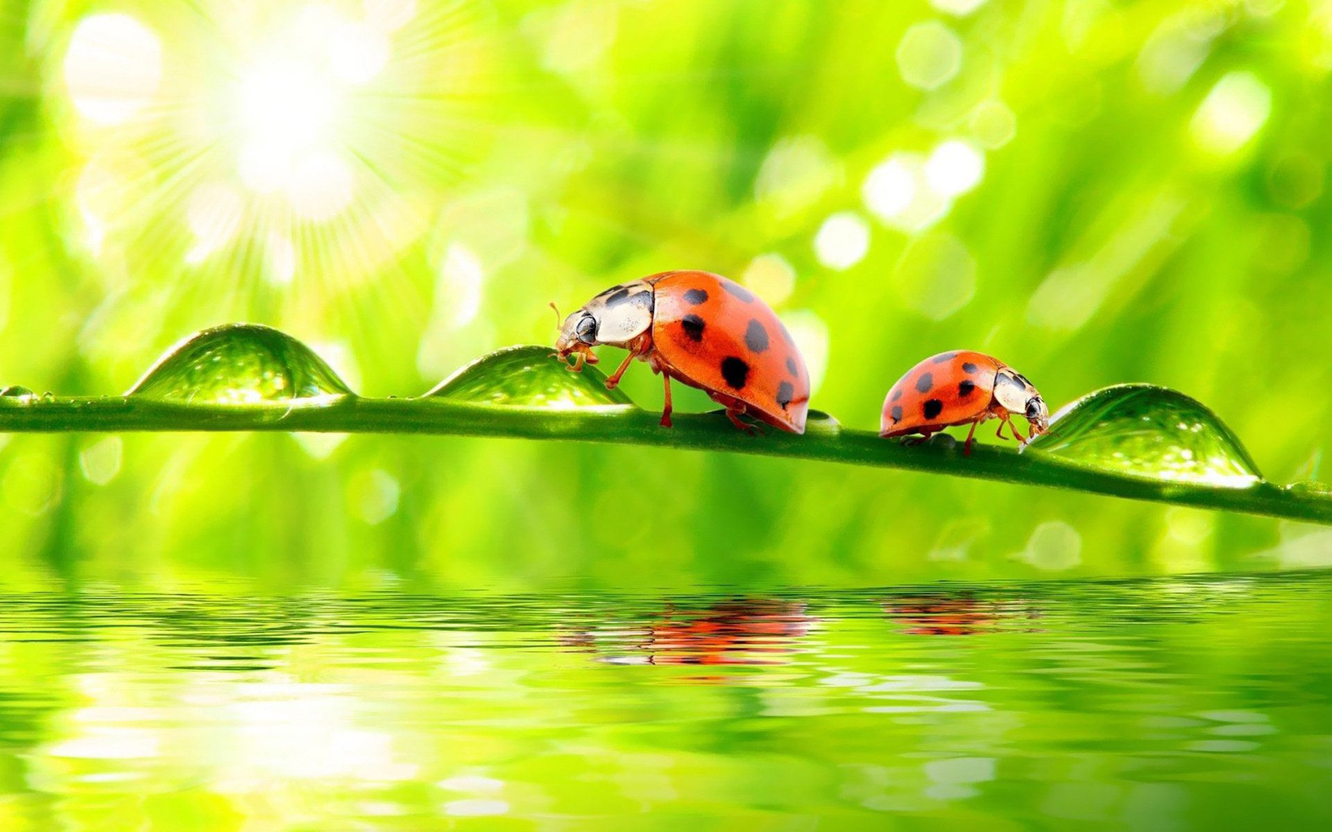 Water Drop Wallpaper For Iphone Ladybug Wallpapers Pictures Images