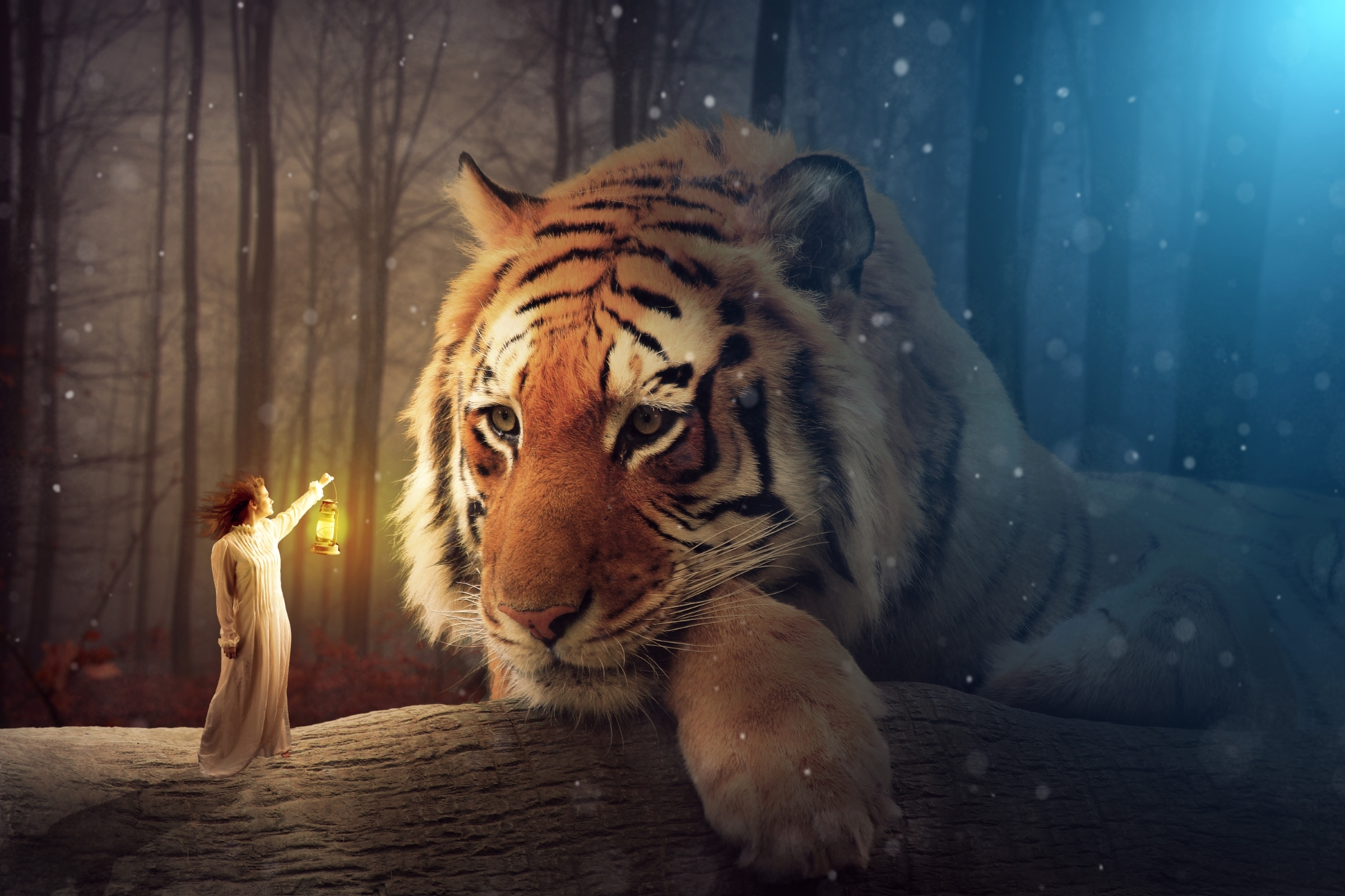 Android 3d Wallpaper Tutorial Tiger Wallpapers Pictures Images