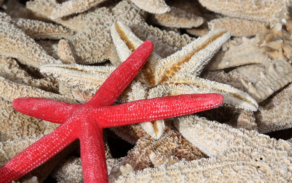 Alienware Wallpaper Hd 1920x1080 Starfish Wallpapers Pictures Images