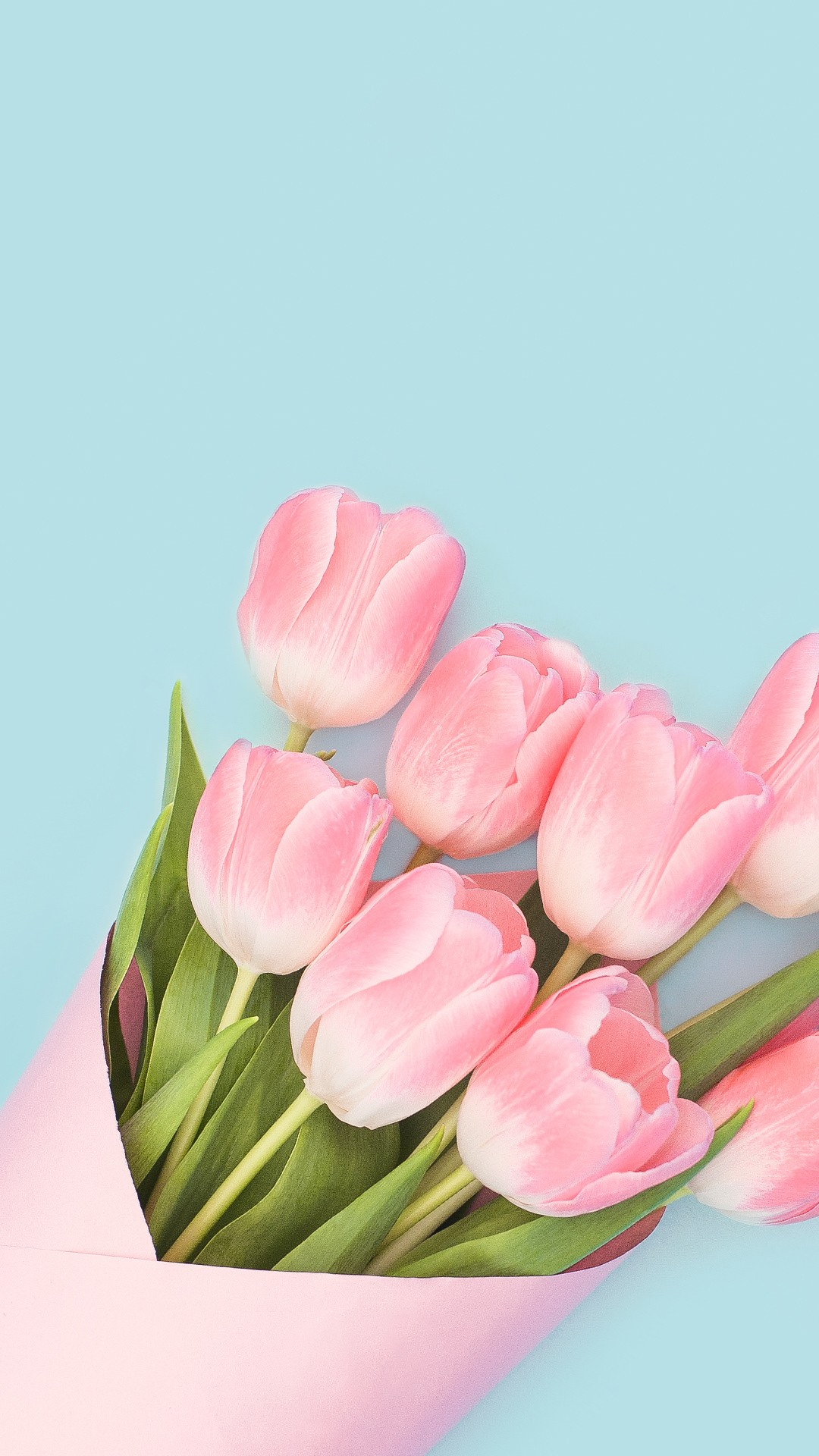 Pink Rose 3d Wallpaper Baby Pink Tulips Wallpapers Hd Wallpapers Id 22031