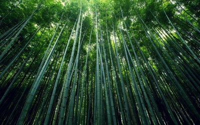 Bamboo Forest Wallpapers | HD Wallpapers | ID #15860