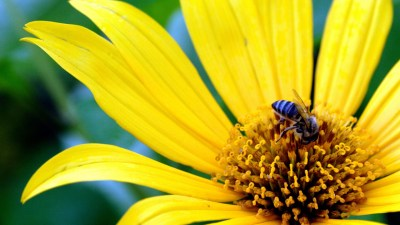 Big Yellow Flower Wallpapers | HD Wallpapers | ID #5633