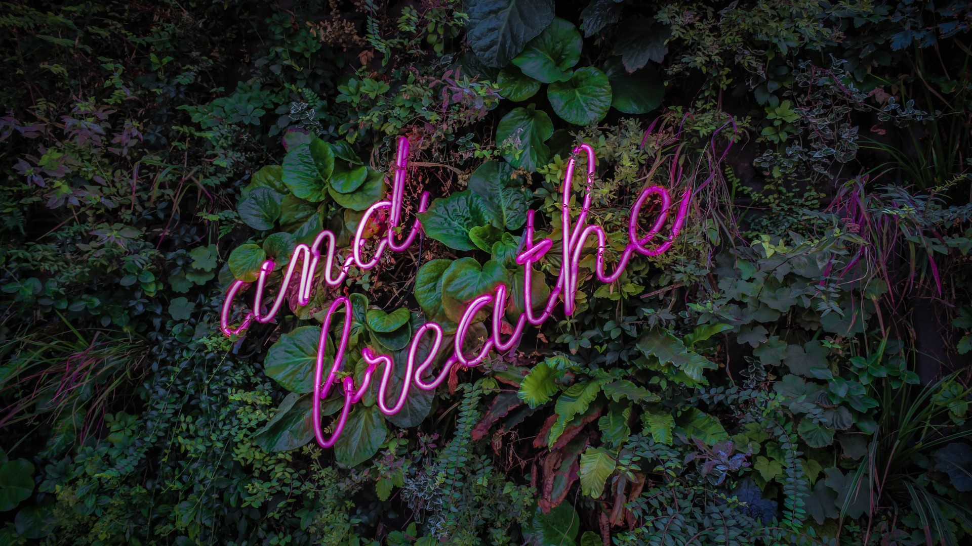Hd 3d Computer Wallpapers Breathe Neon Sign 5k Wallpapers Hd Wallpapers Id 27243