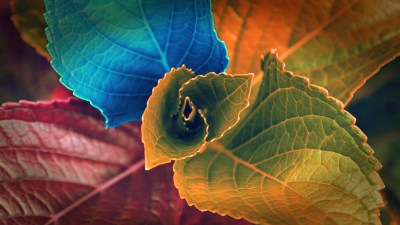 Colors of Leaves Wallpapers | HD Wallpapers | ID #12741