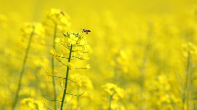 Complete Yellow Flowers Wallpapers | HD Wallpapers | ID #5693