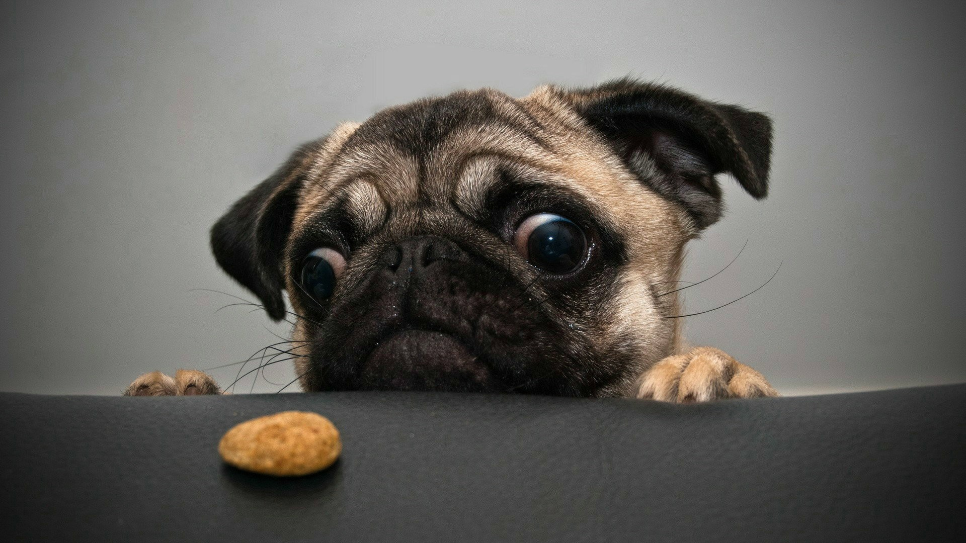 Pug Iphone Wallpaper Crazy Pug Wallpapers Hd Wallpapers Id 10816