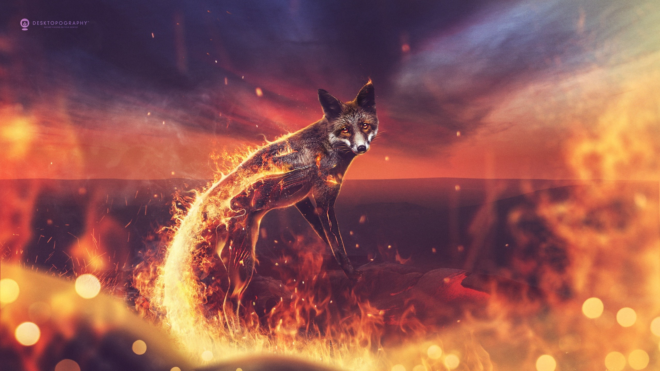Cool Cute 3d Wallpapers Fire Fox Wallpapers Hd Wallpapers Id 17348