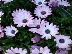 High Resolution Flowers