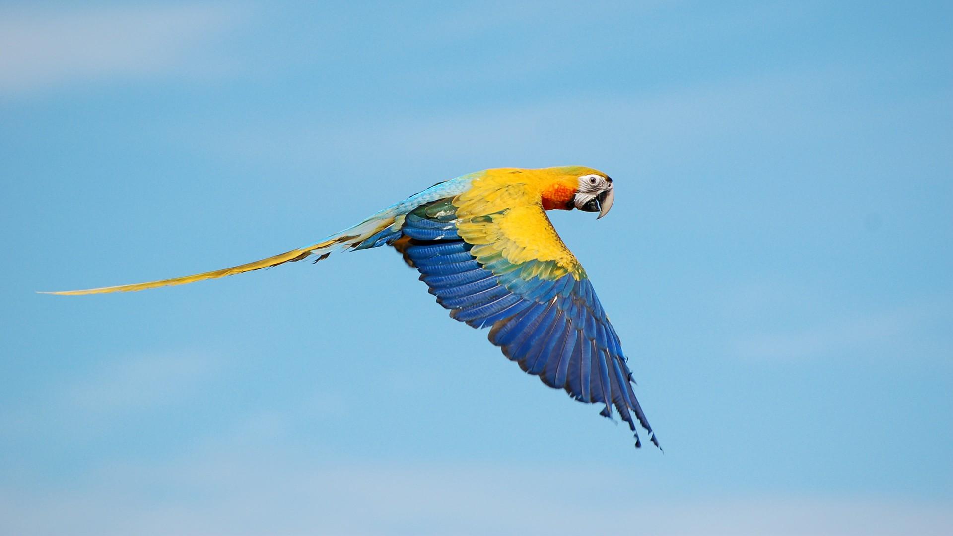 3d Cheetah Wallpaper Flying True Macaws Wallpapers Hd Wallpapers Id 20295
