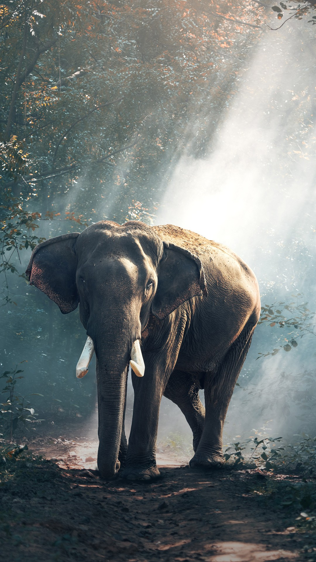 Hd Desktop Wallpapers For Windows 7 Forest Elephant 4k Wallpapers Hd Wallpapers Id 22363
