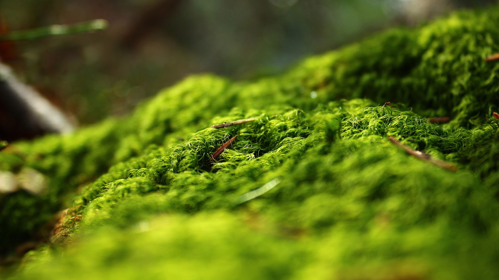 Forest In 3d Landscape Wallpaper Forest Springtime Wallpapers Hd Wallpapers Id 12844