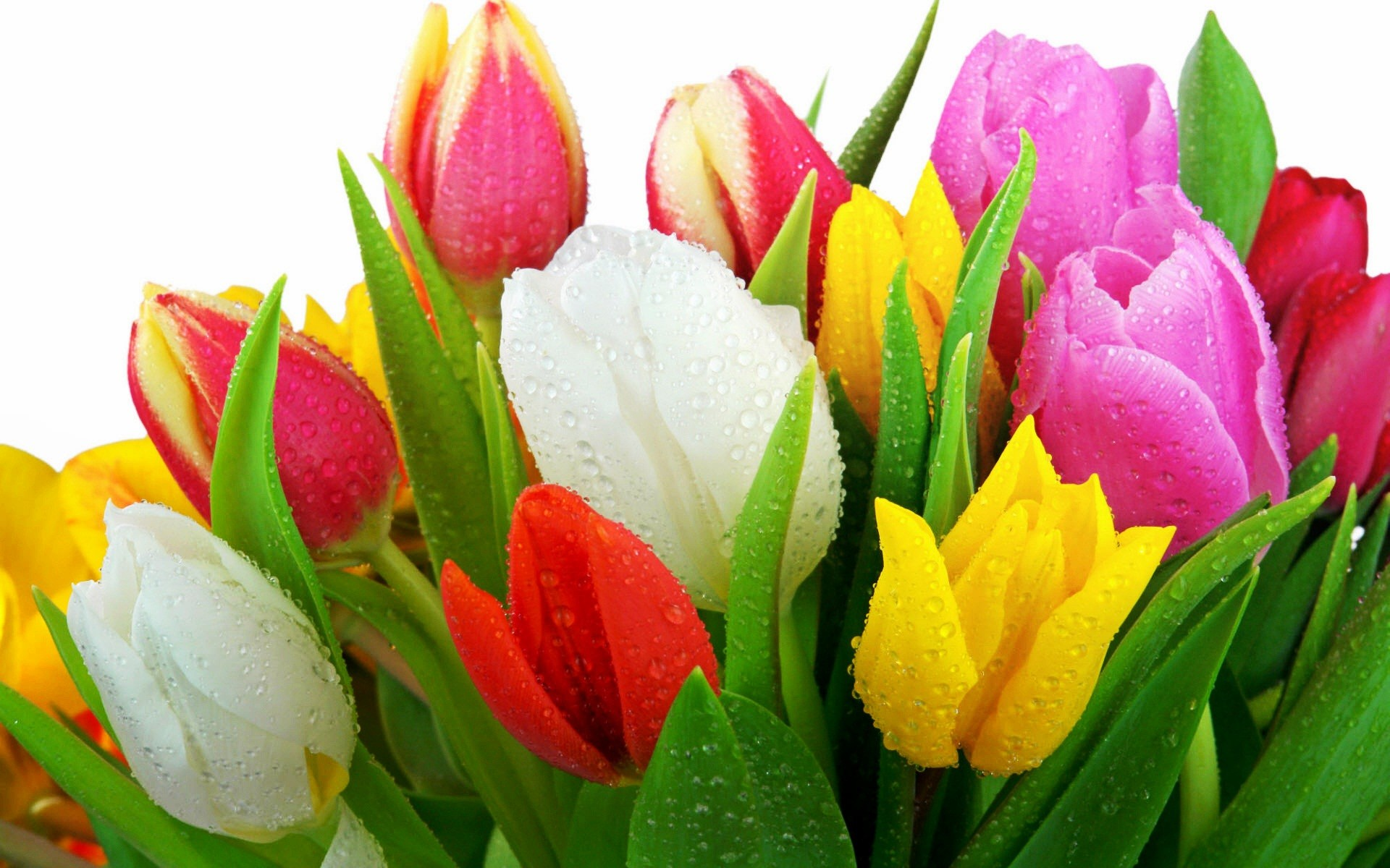 Iphone 4 3d Wallpaper Ios 7 Fresh Tulips Wallpapers Hd Wallpapers Id 8850