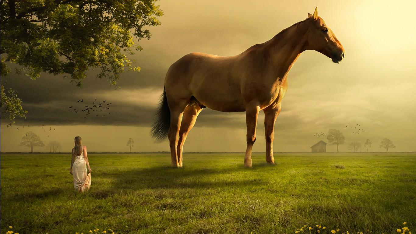 Cute Iphone 8 Wallpaper Girl Horse Landscape 4k Wallpapers Hd Wallpapers Id 27103
