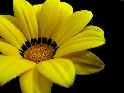 Great Yellow Flower Wallpapers | HD Wallpapers | ID #5601