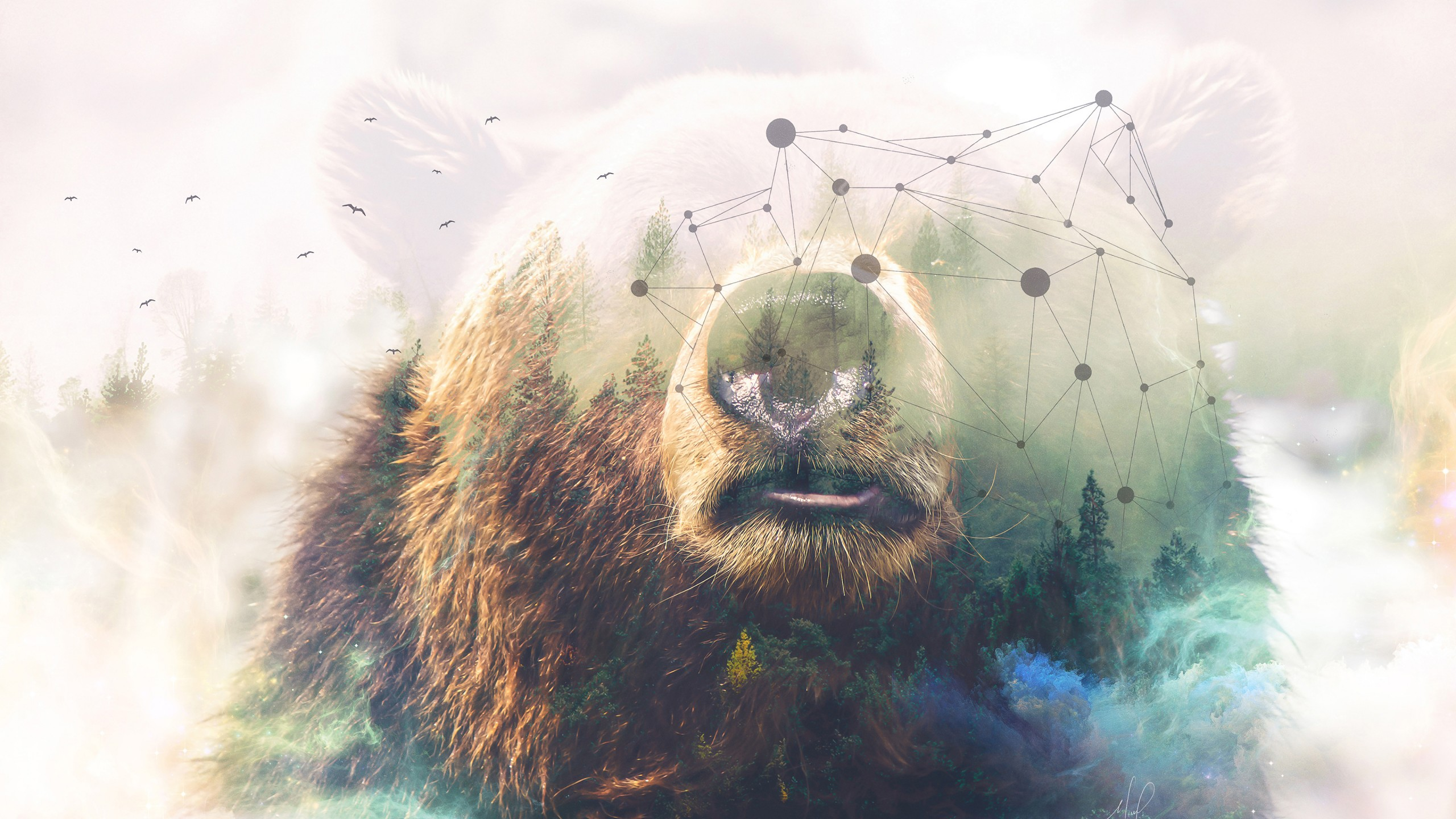 Why So Serious Wallpaper Iphone 6 Grizzly Bear Forest Double Exposure 4k Wallpapers Hd