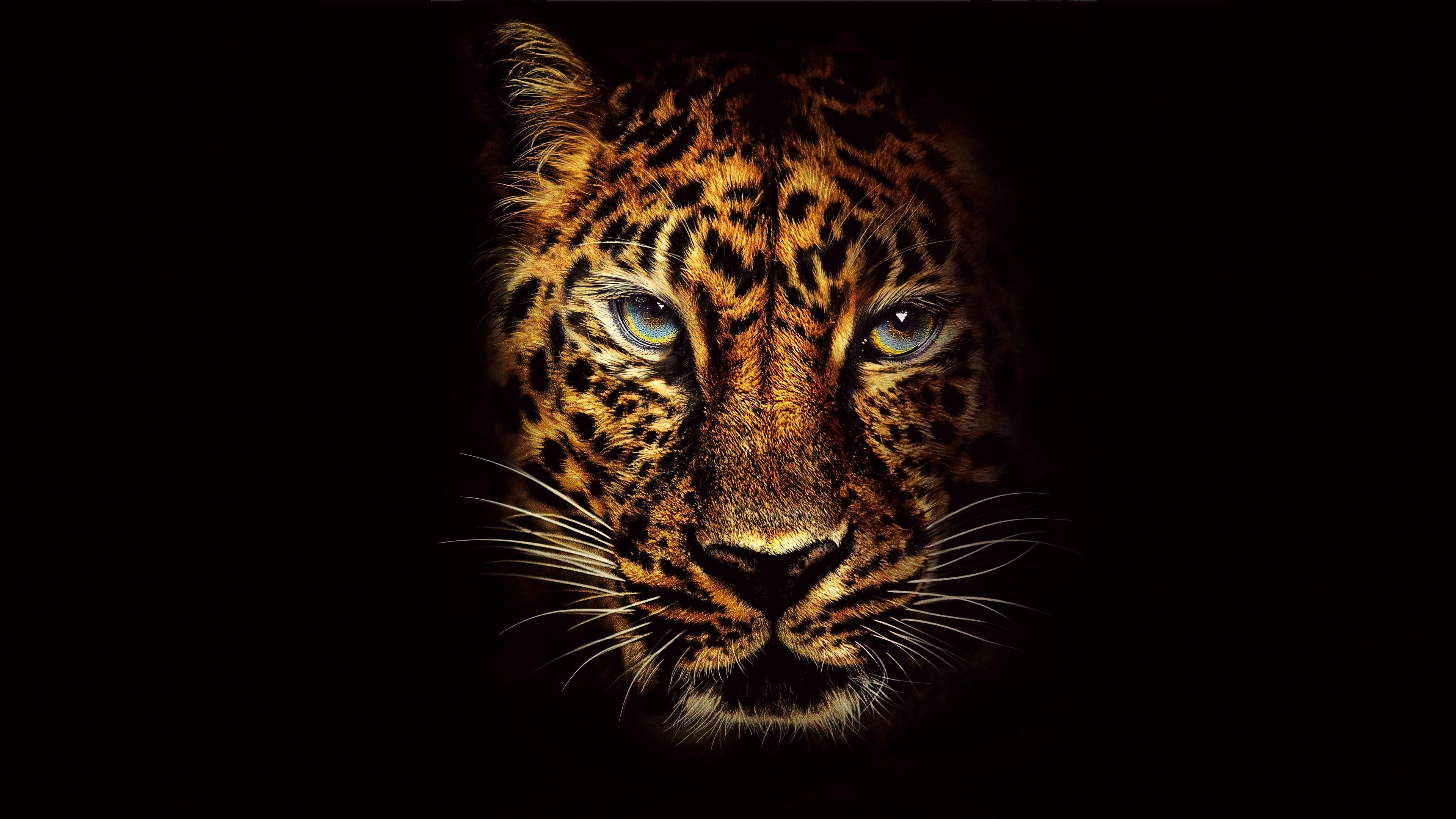 Download Wallpaper Aquarium 3d Jaguar In Jumanji Welcome To The Jungle 4k 8k Wallpapers