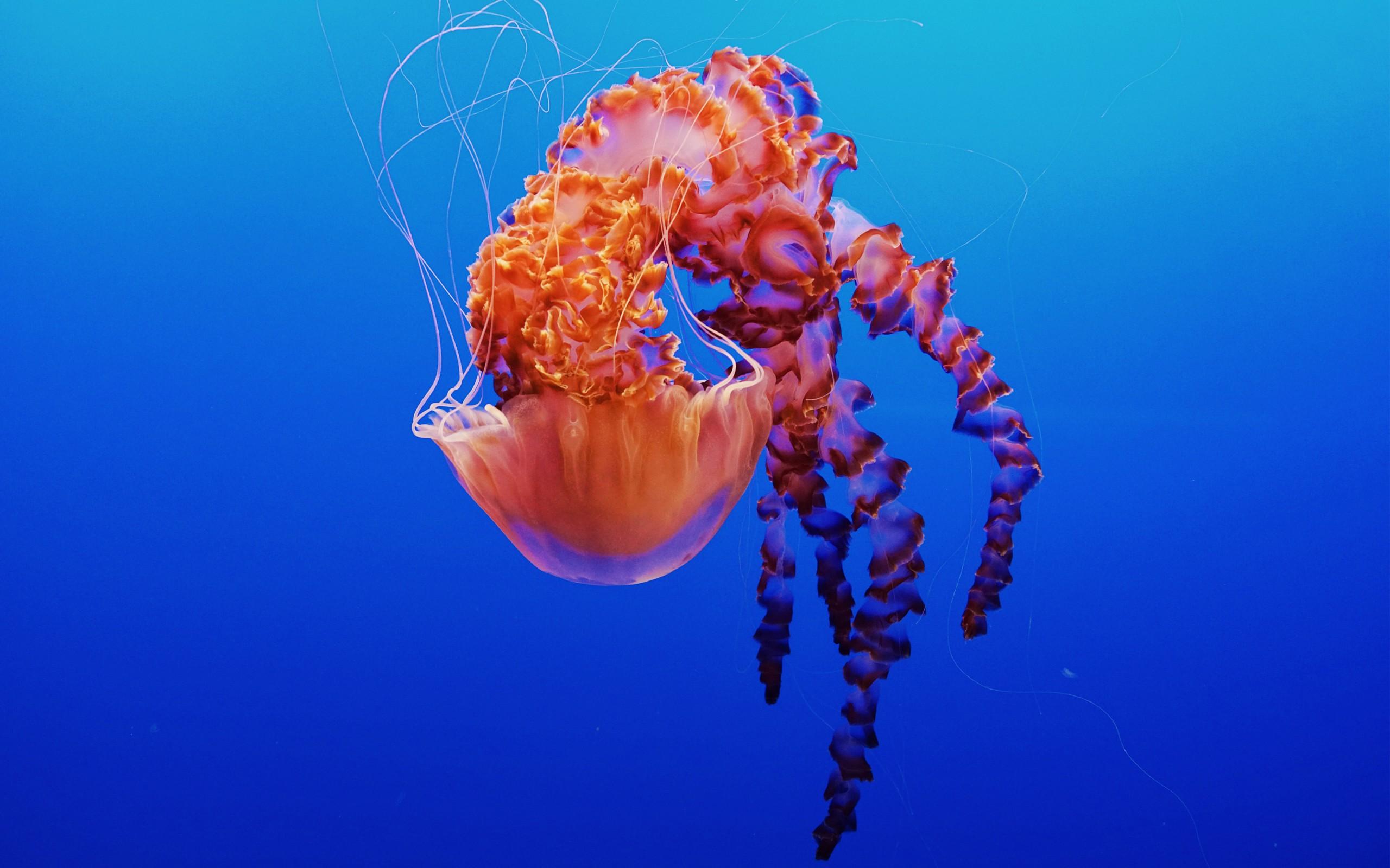 Coral Reef Wallpaper Hd Jellyfish In Monterey Bay Aquarium 4k Wallpapers Hd