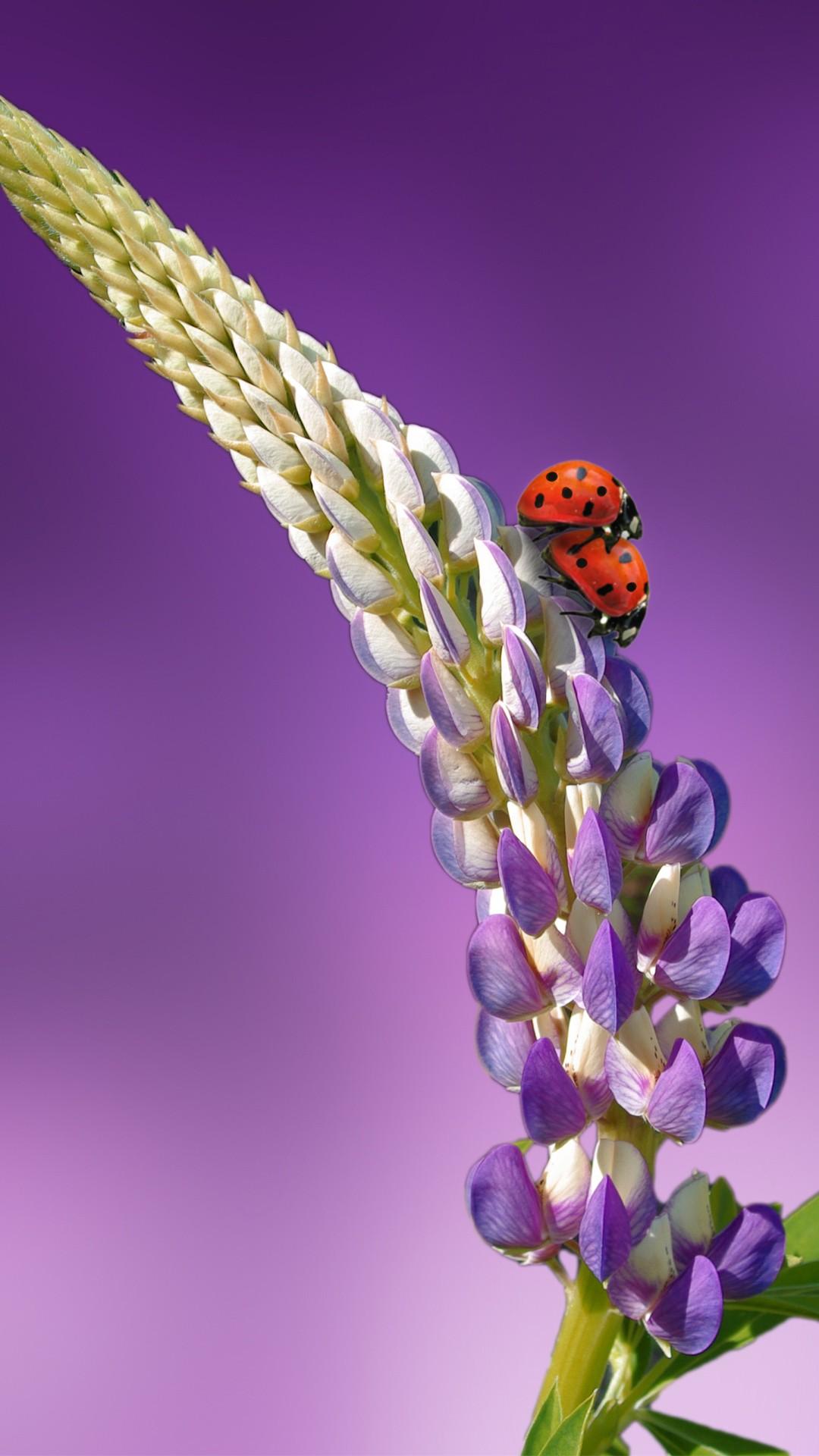 Lady Butterfly Hd Wallpaper Ladybird Lavender Ladybug 5k Wallpapers Hd Wallpapers