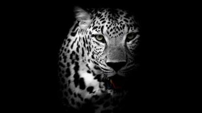 Leopard 4K Wallpapers | HD Wallpapers | ID #21099