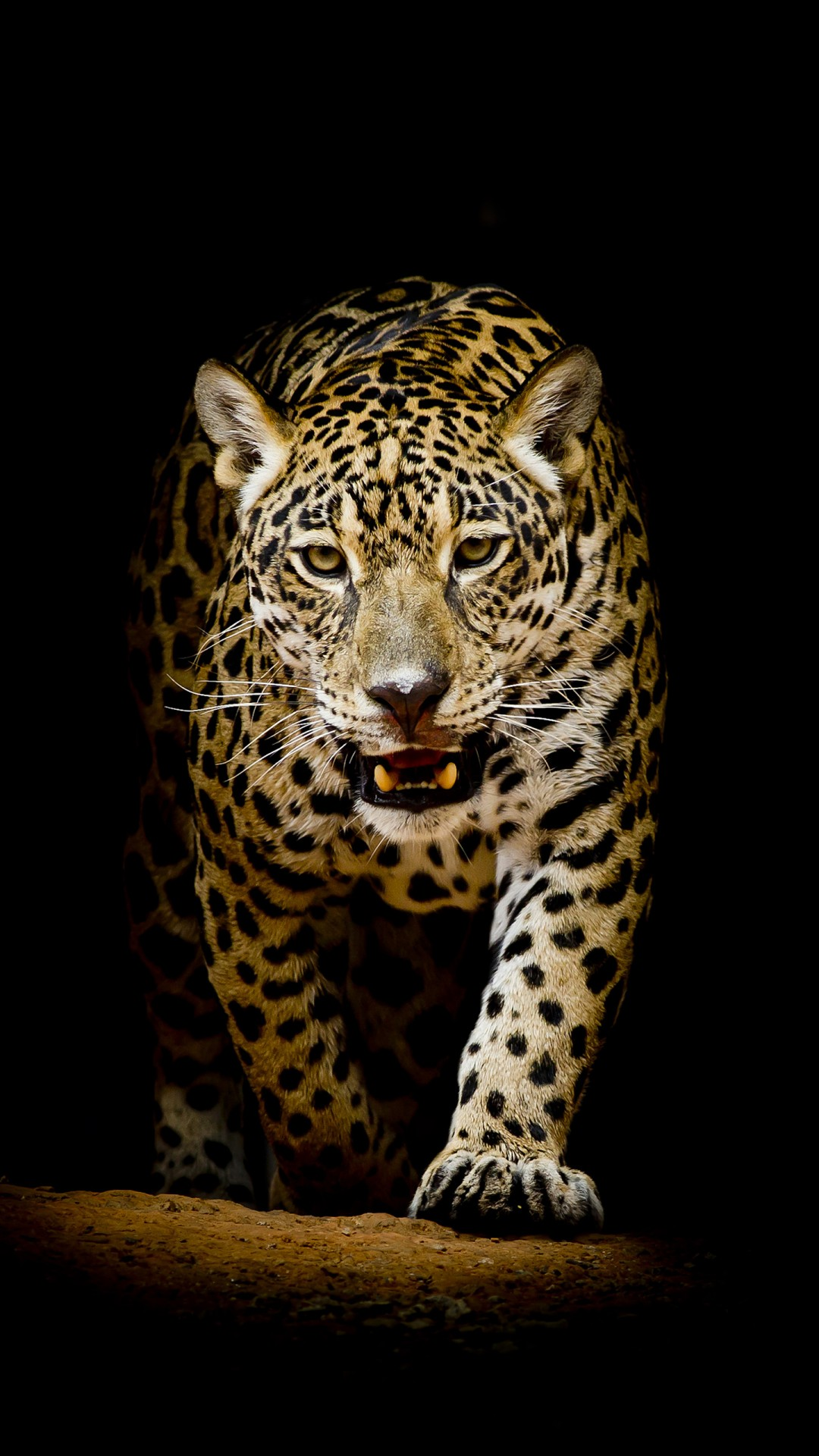 3d Windows Phone Wallpaper Leopard 4k Hd Wallpapers Hd Wallpapers Id 22564