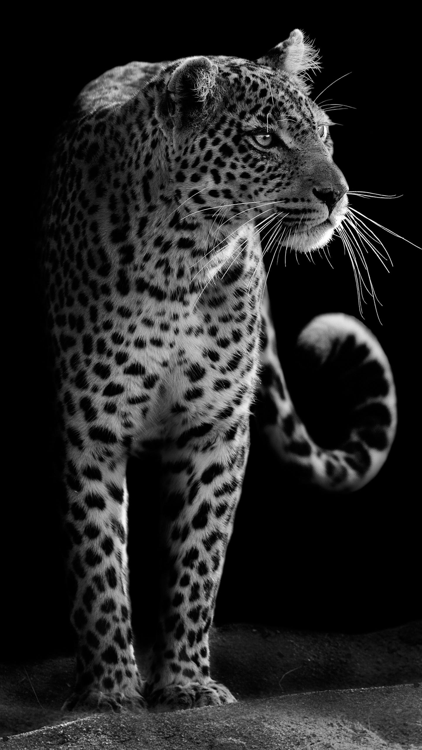 Cheetah Wallpaper Hd Leopard Hd 4k Wallpapers Hd Wallpapers Id 21614