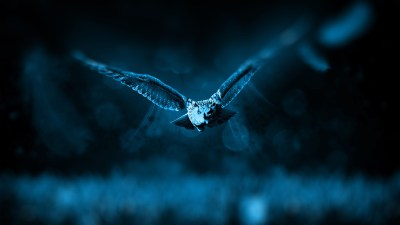 Night Owl Wallpapers   HD Wallpapers   ID #16111