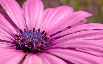 Pink flower HD Wide Wallpapers | HD Wallpapers | ID #5720
