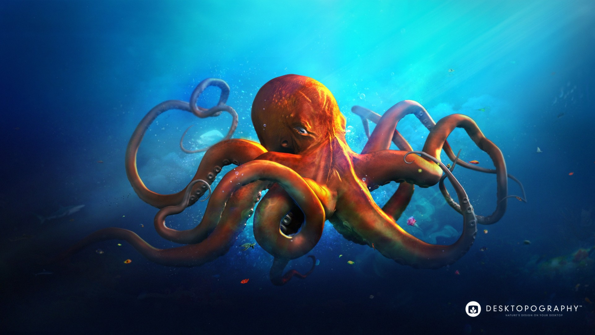 Ultra Hd 4k Wallpapers For Iphone Slouching Octopus Wallpapers Hd Wallpapers Id 13917