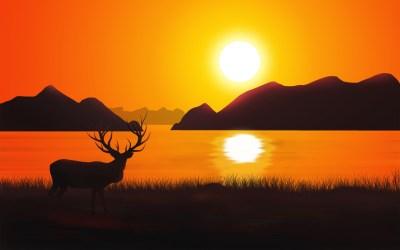 Sunset Deer Silhouette 4K Wallpapers   HD Wallpapers   ID #25094