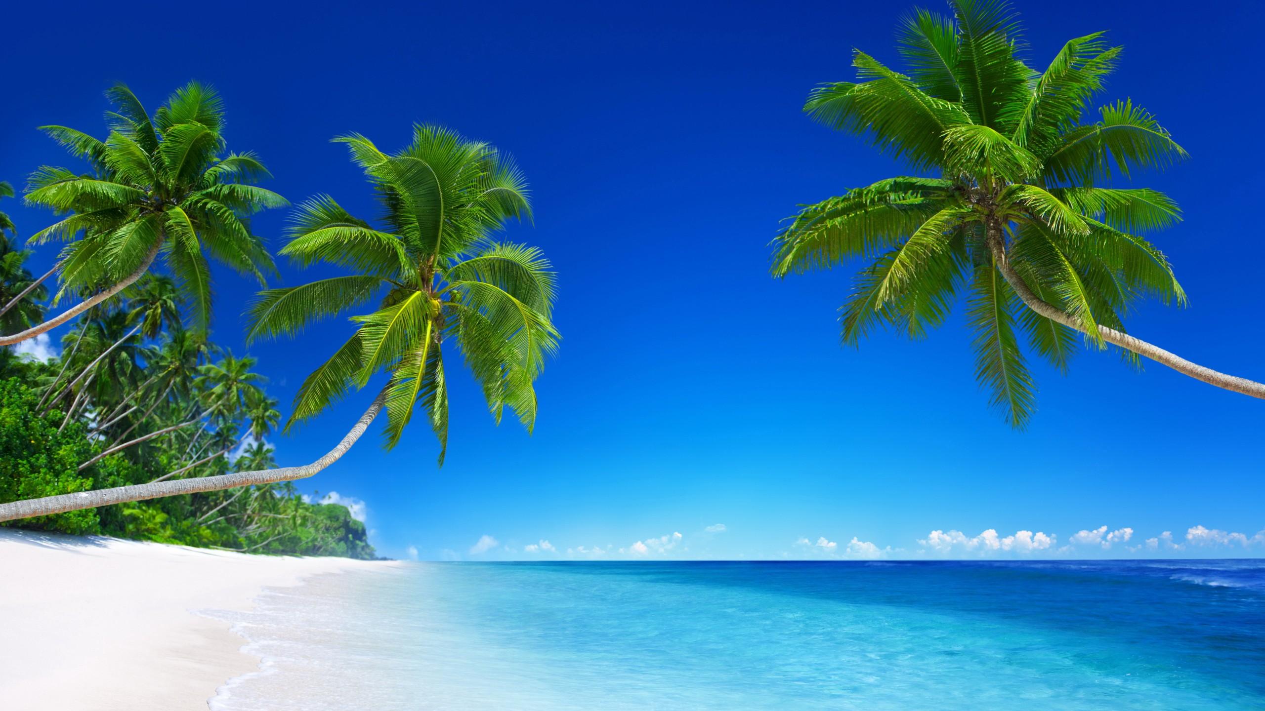 Iphone Wallpaper Beach Girl Tropical Beach Paradise 5k Wallpapers Hd Wallpapers Id