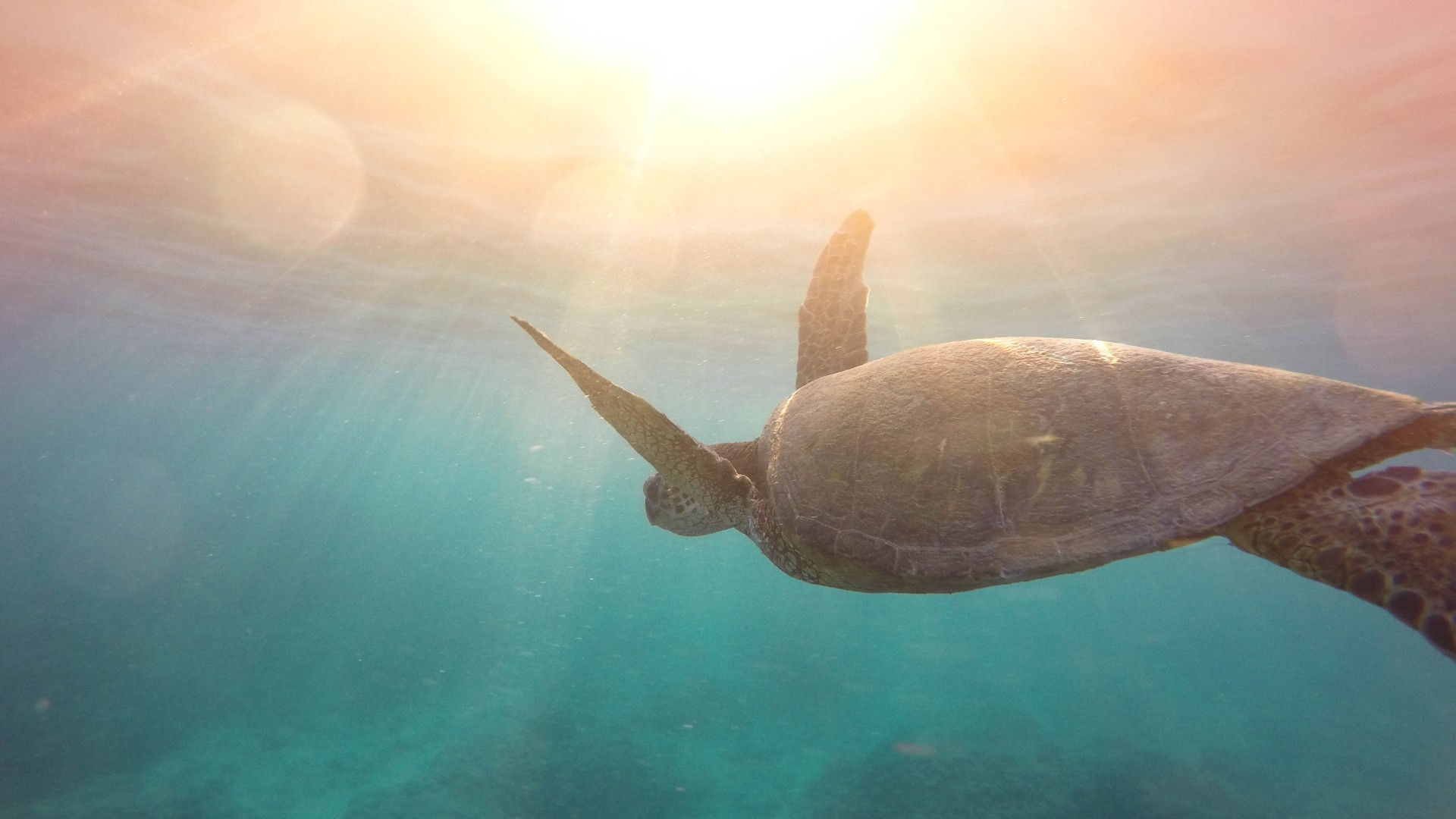 Love Birds Cute Wallpaper Turtle Underwater 4k Wallpapers Hd Wallpapers Id 21789