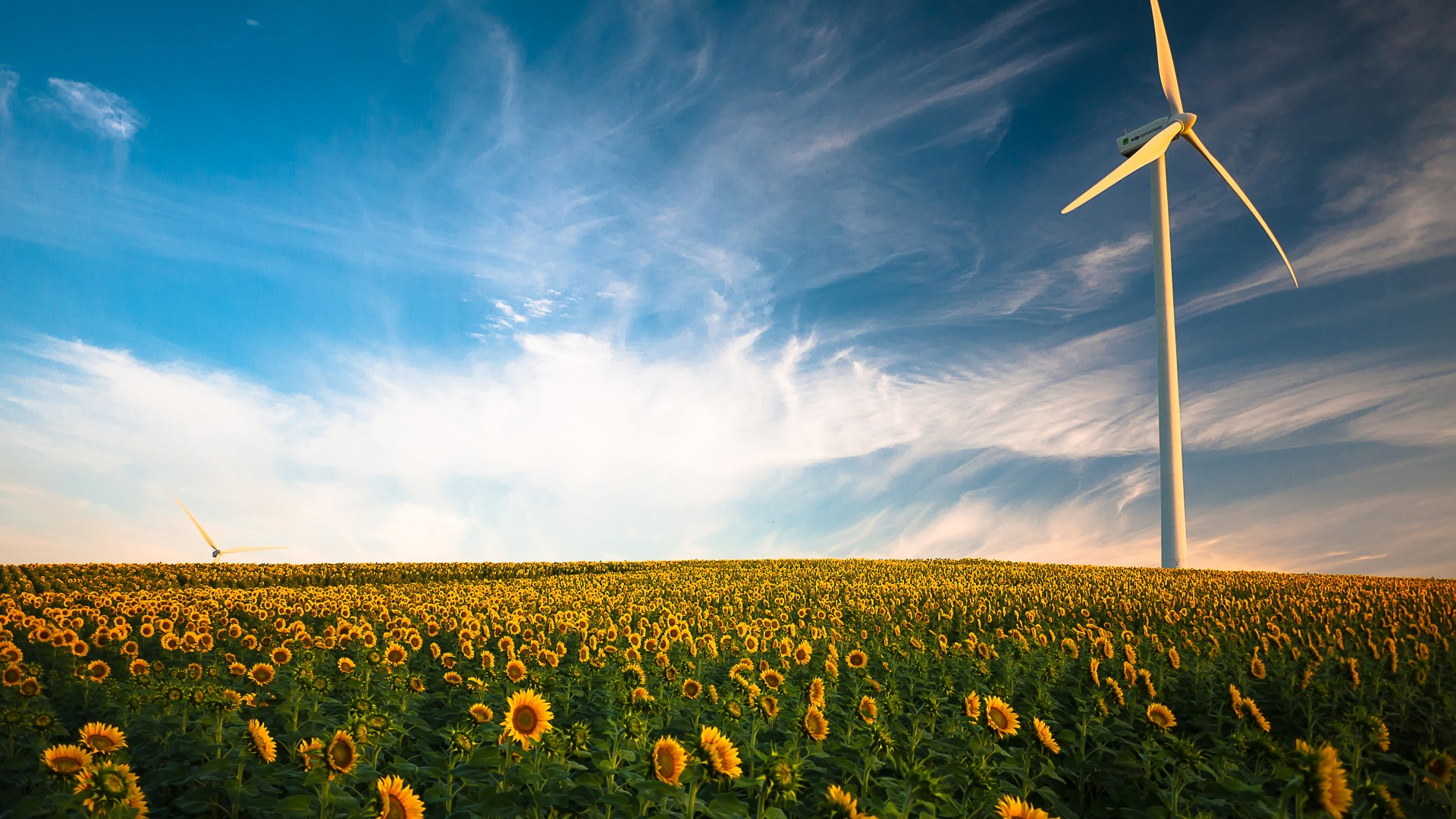 3d Wallpaper For Ipad 4 Wind Turbine Sunflower Field 4k Wallpapers Hd Wallpapers