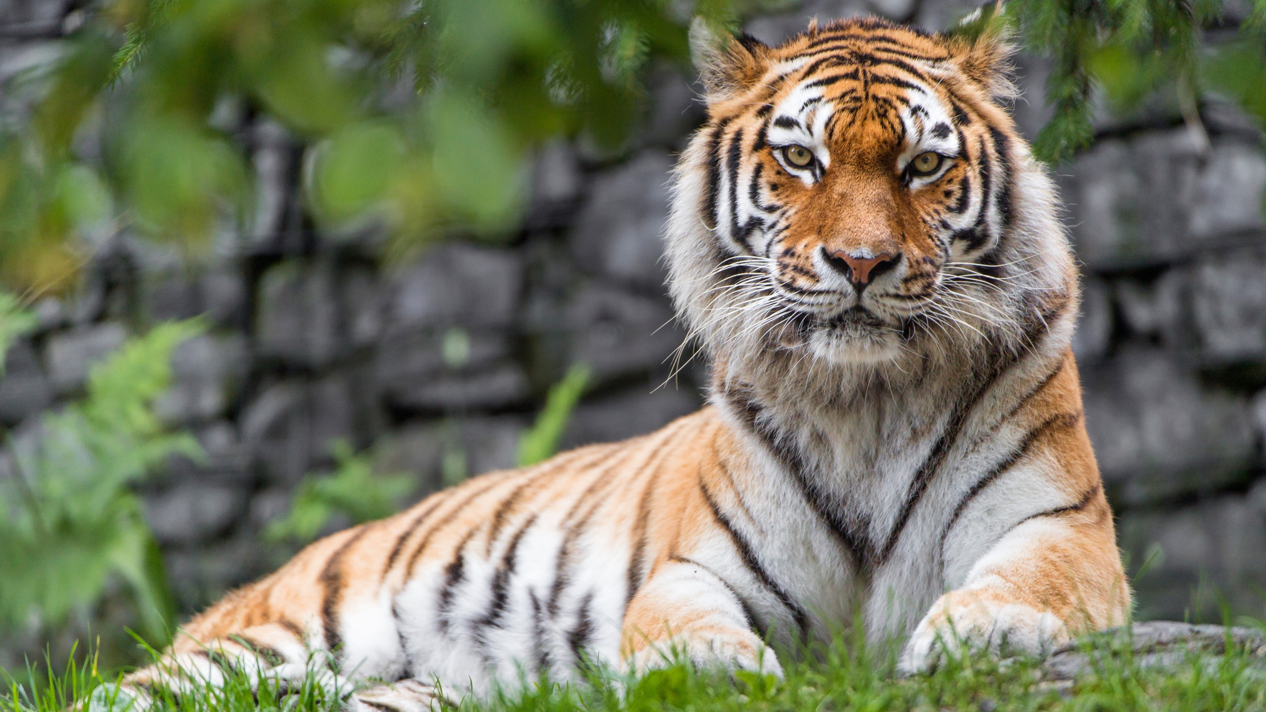 Real 3d Wallpaper For Android Zoo Tiger Wallpapers Hd Wallpapers Id 21100