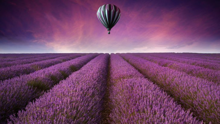 Wallpaper Quotes Iphone 6 Plus Hot Air Balloon Over Lavender Field Wallpaper Abstract
