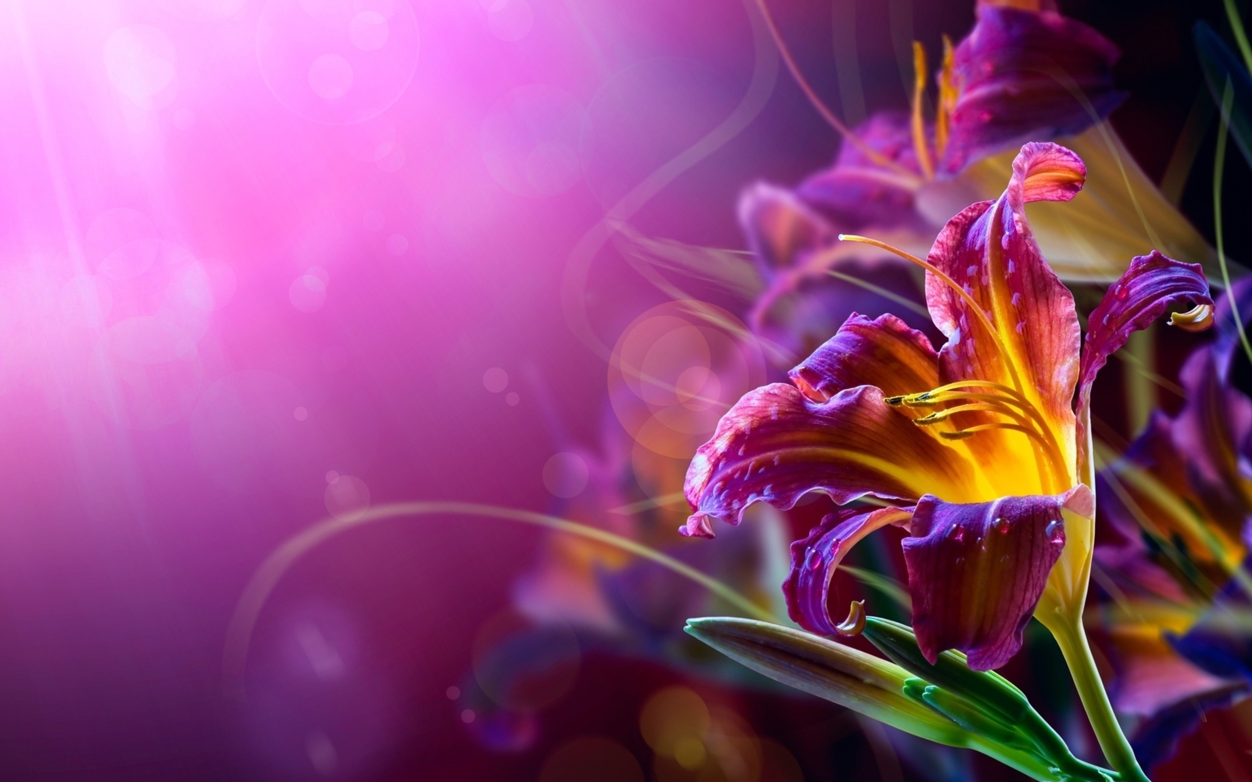 Barbie Hd Wallpapers Free Download Abstract Flower Hd Wallpaper