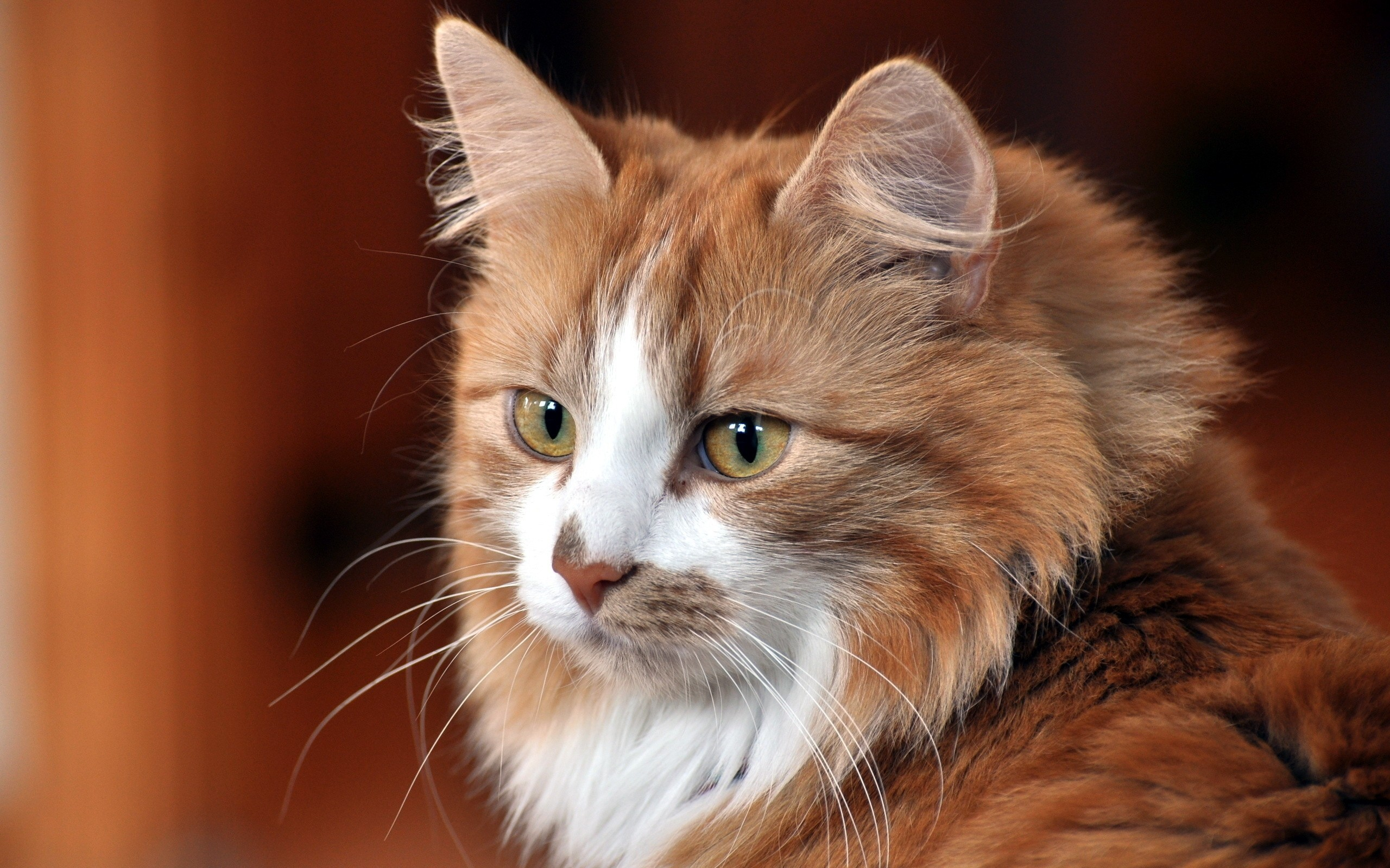 Iphone X Glitter Wallpaper Cat Face Cat Cool Cat Cute Cat Wallpaper Hd Wallpapers