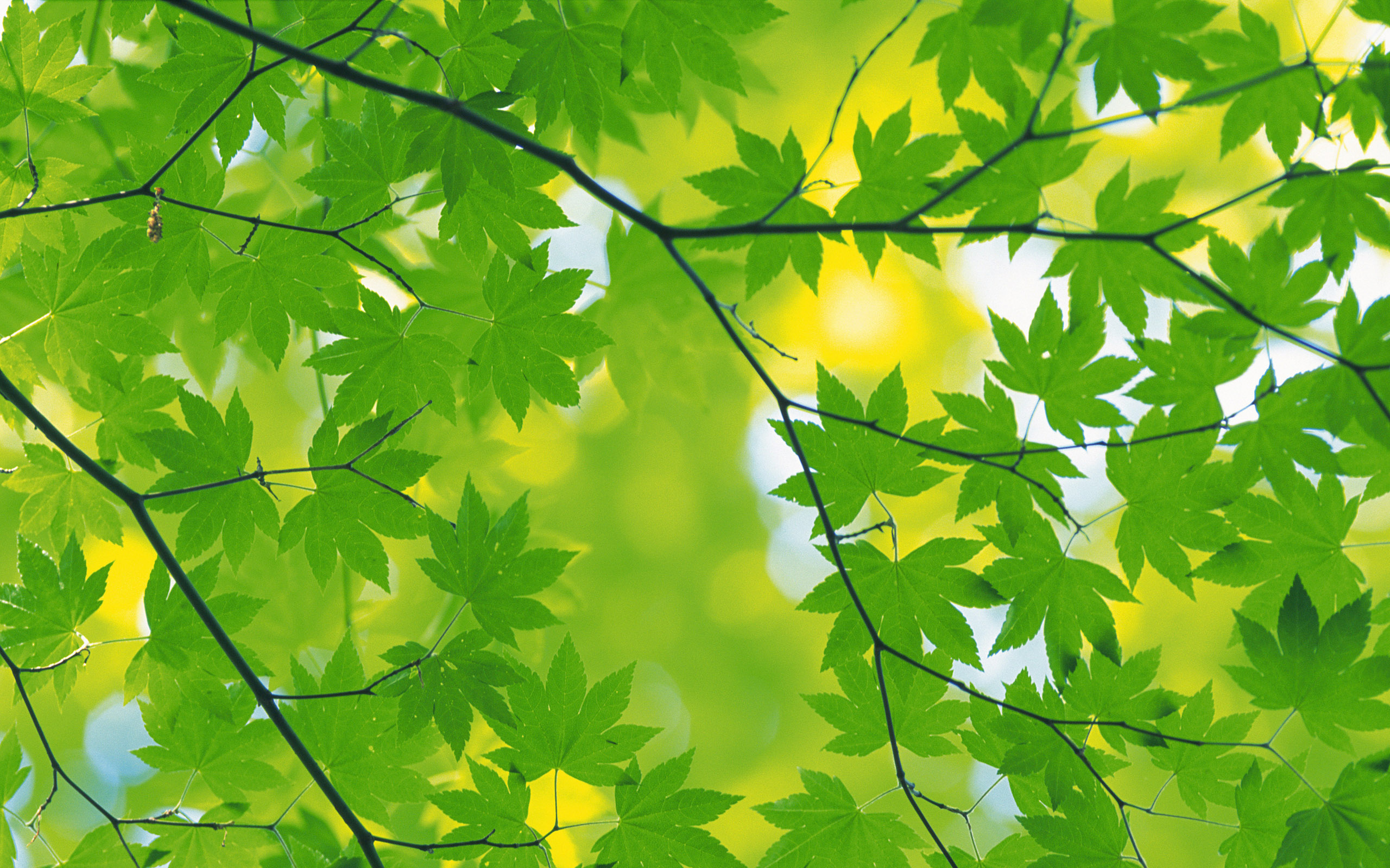 Ahmed Name Wallpaper 3d Green Leaf Background Hd Wallpapers Pulse