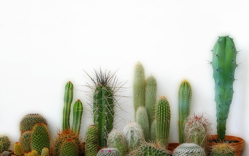 Computer Wallpaper Beach Hipster Quotes Cactus Wallpaper Hd Wallpapers Pulse