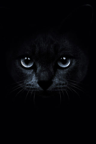 Cute Chat Wallpaper For Whatsapp Black Cat Background Hd Wallpapers Pulse