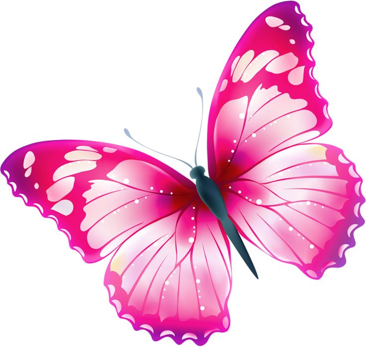 Cute Wallpapers For Phones Animated Pink Butterfly Hd Wallpapers Pulse