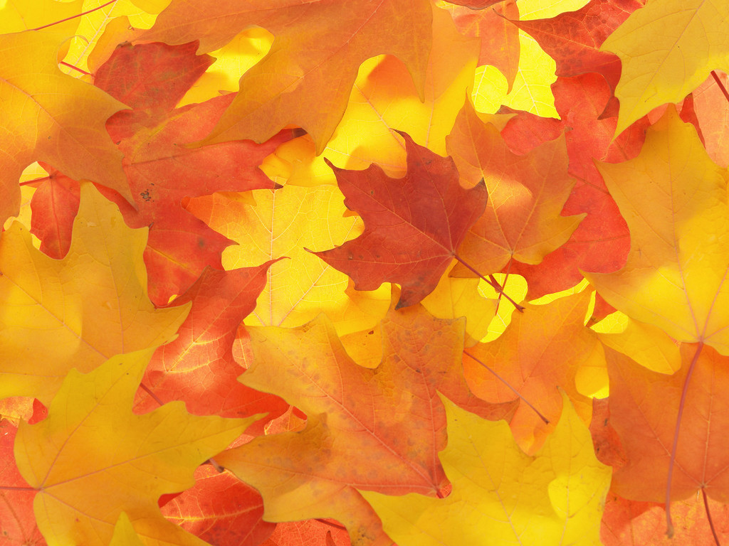 Falling Leaves Live Wallpaper Hd Fall Leaves Background 20804 1024x768 Px Hdwallsource Com