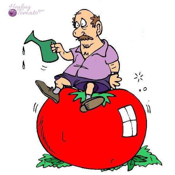 404 Image - Healing Tomato