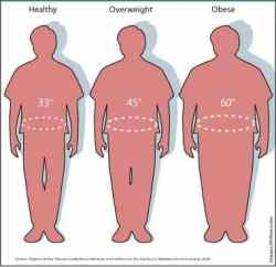 Images of Waist sizes and how they relate to being healthy, overweight ...