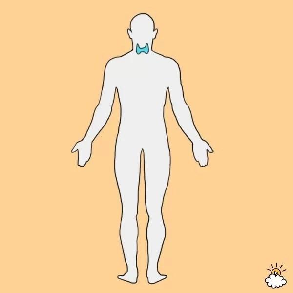 4 Balances the thyroid