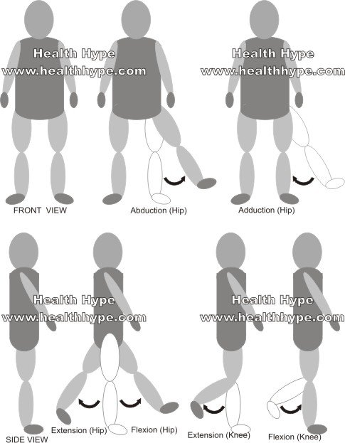 Thigh Muscles Diagram, Pictures, List of Actions Healthhype