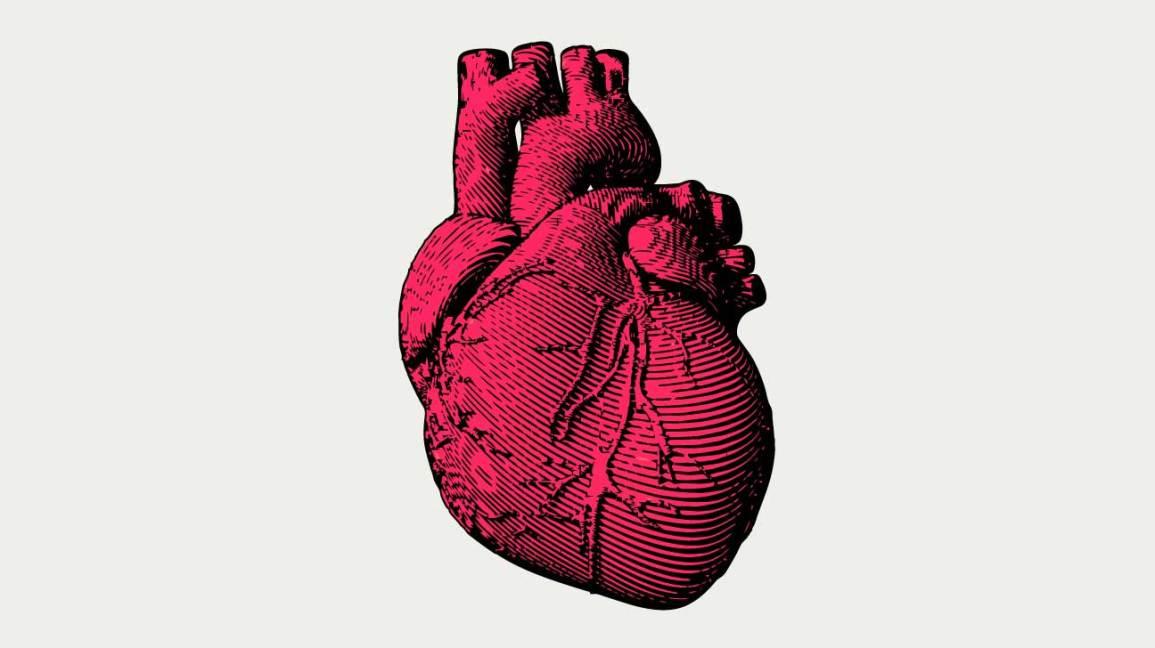The Human Heart May Have a Natural 'Backup Battery'