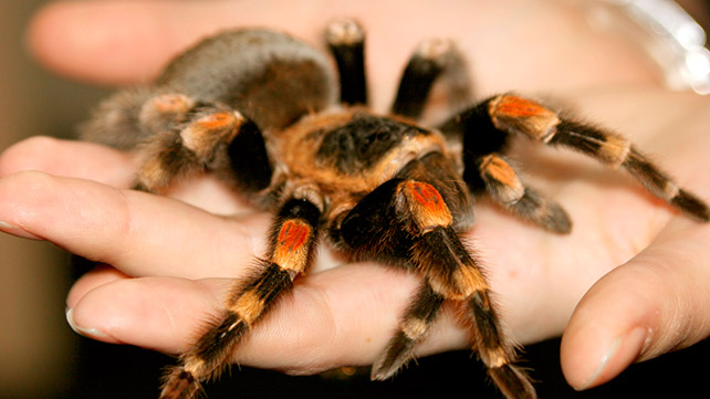 Spider Bites Identify What Bit You and Get Proper Help