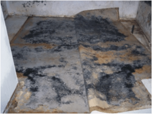 Mold Remediation Healthy Homes